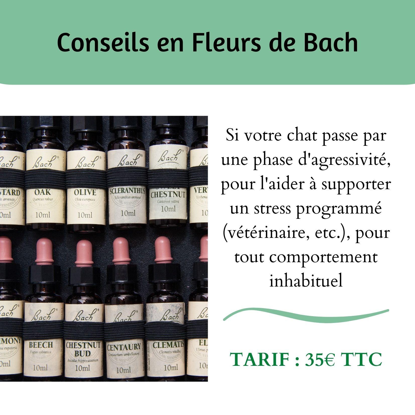 Conseils Fleurs de Bach - Chats