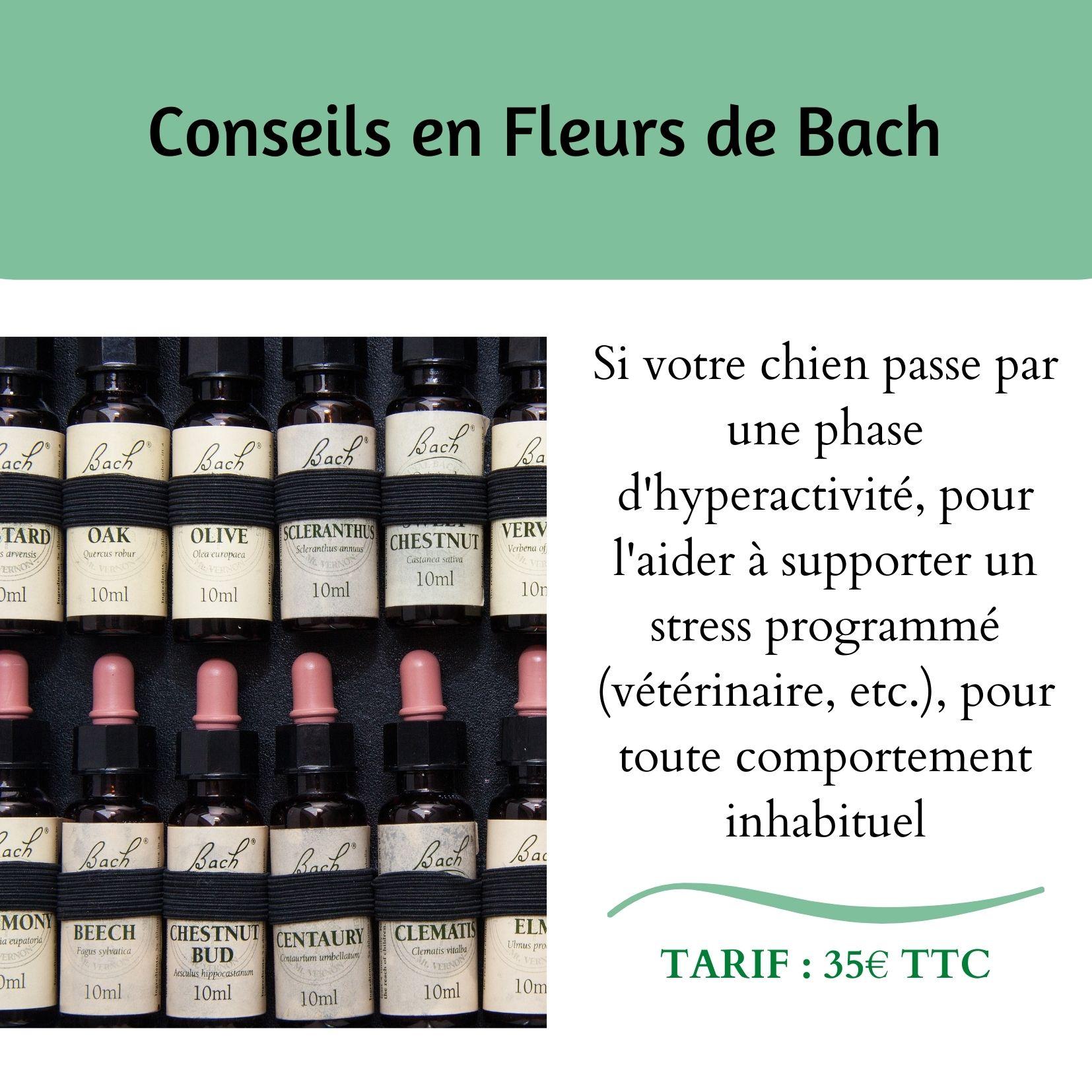 Conseils Fleurs de Bach - Chiens